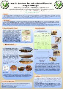 Etude des formicidae dans trois milieux diffrent dans