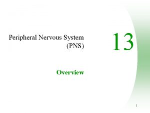 Peripheral Nervous System PNS 13 Overview 1 Peripheral