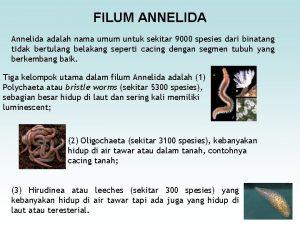 FILUM ANNELIDA Annelida adalah nama umum untuk sekitar