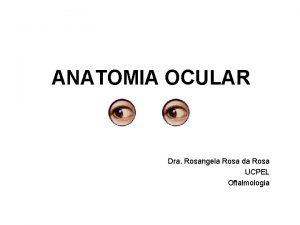 ANATOMIA OCULAR Dra Rosangela Rosa da Rosa UCPEL