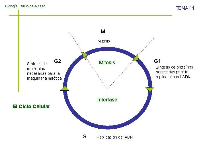 Biologa Curso de acceso TEMA 11 M Mitosis