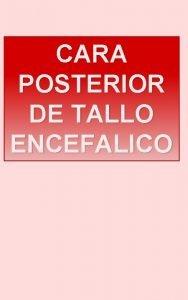CARA POSTERIOR DE TALLO ENCEFALICO CARA POSTERIOR DE