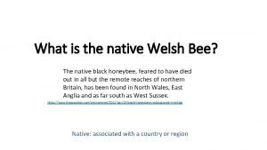 What is the native Welsh Bee The native