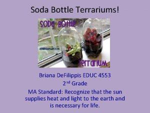 Soda Bottle Terrariums Briana De Filippis EDUC 4553