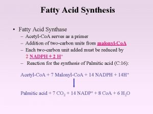 Fatty Acid Synthesis Fatty Acid Synthase AcetylCo A