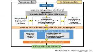 Factores genticos Factores ambientales DIABETES Mecanismos patognicos de