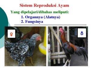 Sistem Reproduksi Ayam Yang dipelajaridibahas meliputi 1 Organnya