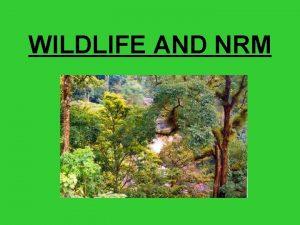 WILDLIFE AND NRM Wildlife and wildlife habitats are