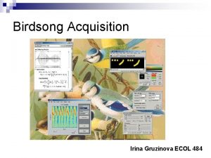 Birdsong Acquisition Irina Gruzinova ECOL 484 Birdsong Acquisition