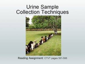 Urine Sample Collection Techniques Reading Assignment CTVT pages