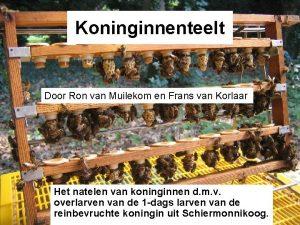 Koninginnenteelt Door Ron van Muilekom en Frans van