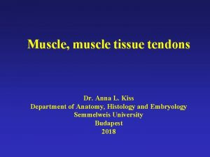 Muscle muscle tissue tendons Dr Anna L Kiss