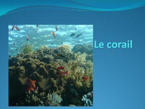 Le corail Cest quoi Des animaux trs anciens