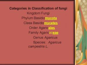 Categories in Classification of fungi Kingdom Fungi Phylum