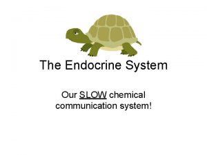 The Endocrine System Our SLOW chemical communication system