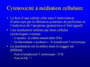 Cytotoxicit mdiation cellulaire La lyse dune cellule cible