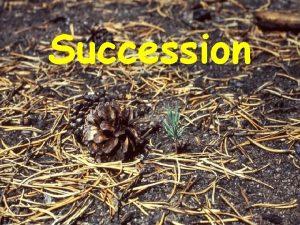 Succession Primary Succession The establishment and development of