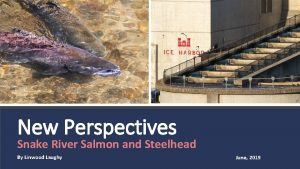 NEW PIC New Perspectives Snake River Salmon and