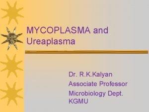 MYCOPLASMA and Ureaplasma Dr R K Kalyan Associate