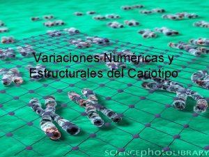 Variaciones Numricas y Estructurales del Cariotipo Conjunto de