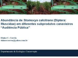 Abundncia de Stomoxys calcitrans Diptera Muscidae em diferentes