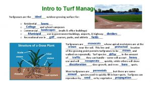 Intro to Turf Management ideal Turfgrasses are the