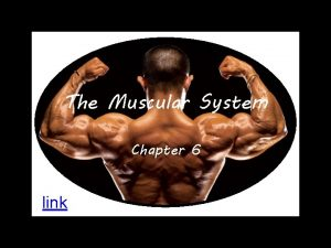 The Muscular System Chapter 6 link Muscle Tissues