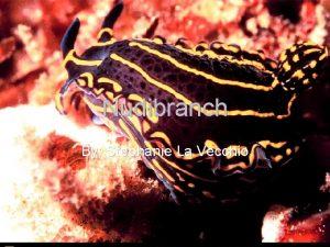 Nudibranch By Stephanie La Vecchio The Scientific Name