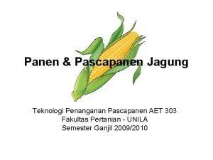 Panen Pascapanen Jagung Teknologi Penanganan Pascapanen AET 303