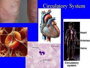Circulatory System Circulatory System Blood Summary Cells called