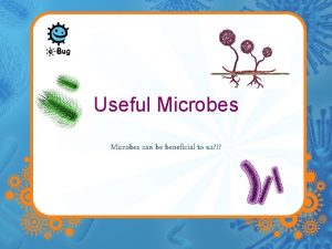 Useful Microbes can be beneficial to us Useful