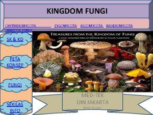 KINGDOM FUNGI CHYTRIDIOMYCOTA SIMBIOSIS FUNGI ZYGOMYCOTA ASCOMYCOTA BASIDIOMYCOTA