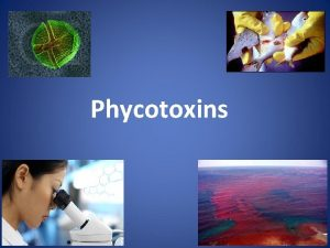 Phycotoxins Marine Marine Marine algal blooms Ocean warming