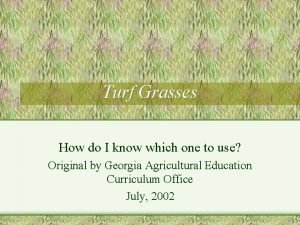 Turf Grasses How do I know which one