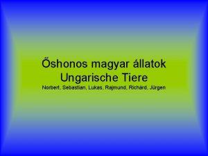 shonos magyar llatok Ungarische Tiere Norbert Sebastian Lukas