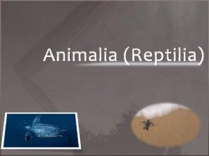 Animalia Reptilia Definisi Reptilia berasal dari kata reptum