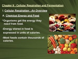Chapter 9 Cellular Respiration and Fermentation I Cellular