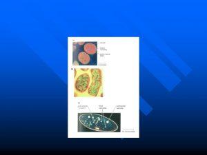 nekil A Prokaryotik hcrenin Escherichia coli bakterisi i
