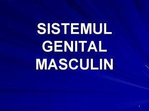 SISTEMUL GENITAL MASCULIN 1 SISTEMUL GENITAL MASCULIN Testicule