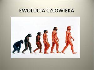 EWOLUCJA CZOWIEKA Kolebk ludzkoci jest Afryka gdzie kiedy