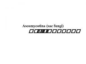 Ascomycotina sac fungi Ascomycotina sac fungi Characterized by