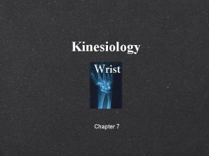 Kinesiology Chapter 7 Wrist Hand Fingers Eaton Hand