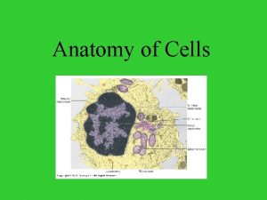 Anatomy of Cells Typical Cell Typical Cell vs