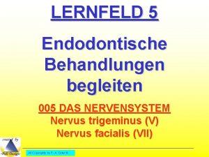 LERNFELD 5 Endodontische Behandlungen begleiten 005 DAS NERVENSYSTEM