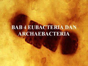 BAB 4 EUBACTERIA DAN ARCHAEBACTERIA POKOK BAHASAN Eubacteria