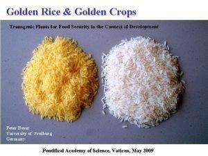 Golden Rice Golden Crops Transgenic Plants for Food