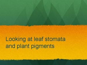 Looking at leaf stomata and plant pigments Bloody