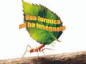 Laltro giorno ho visto una formica che trasportava