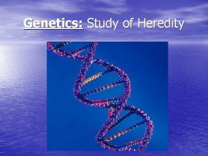 Genetics Study of Heredity Aim What is Genetics