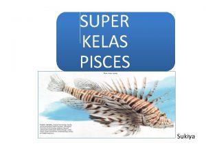SUPER KELAS PISCES Sukiya Super Kelas Pisces Kelas